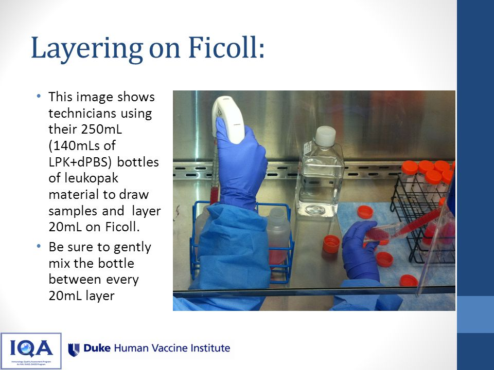 Layering on Ficoll: