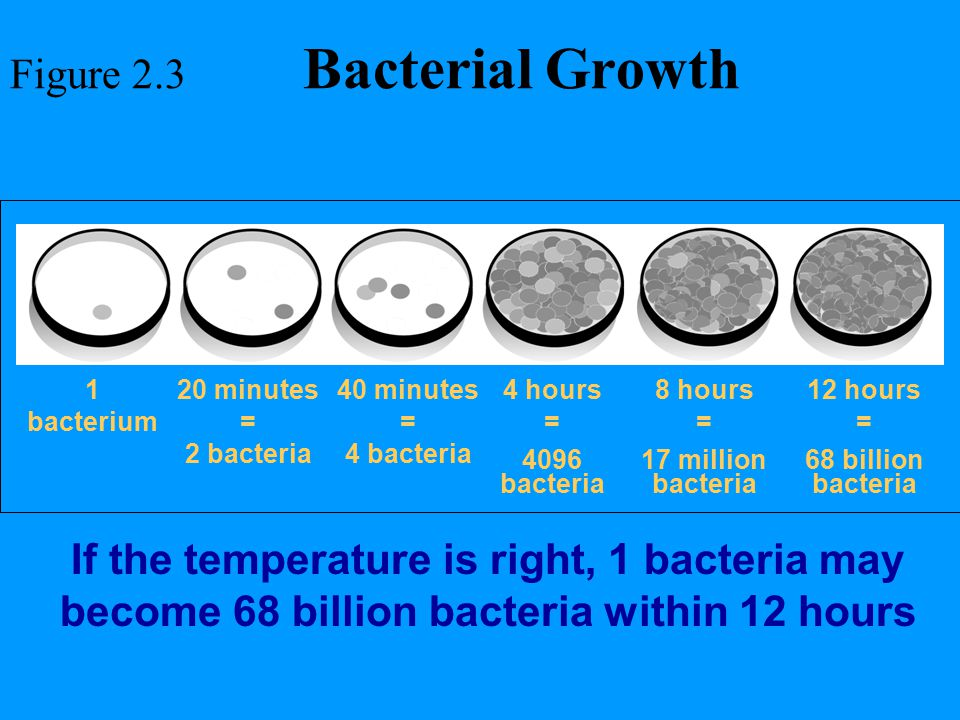 Figure 2.3 Bacterial Growth