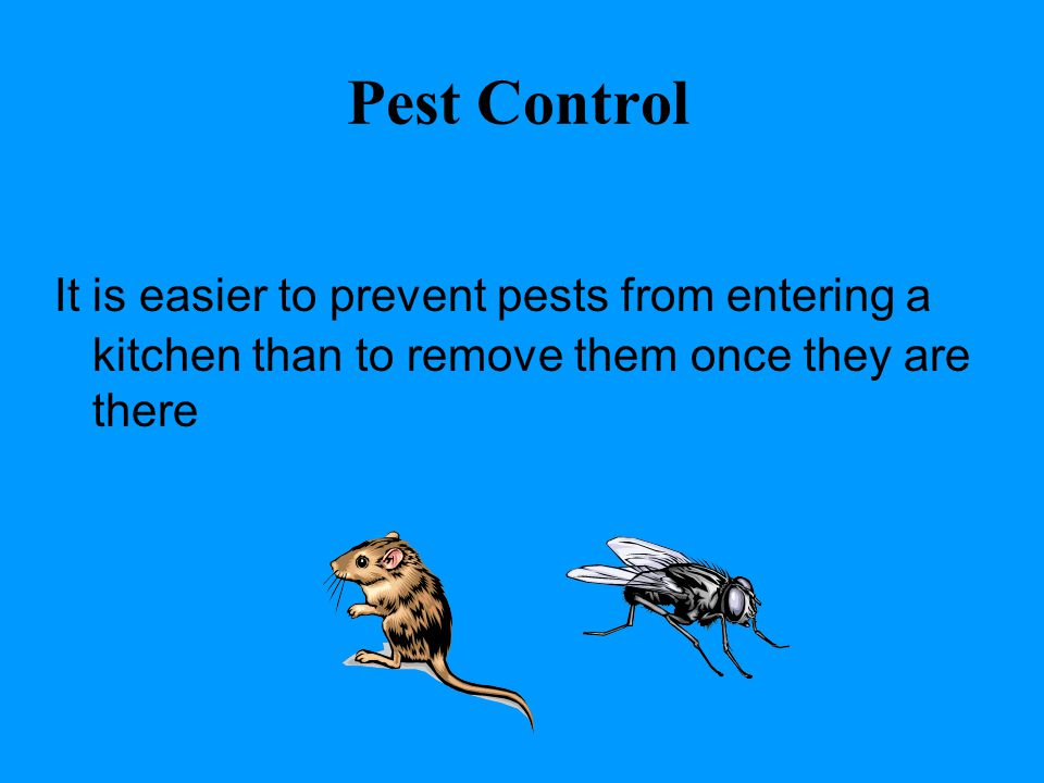 Pest Control It is easier to prevent pests from entering a