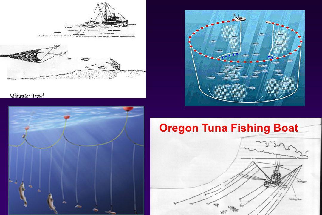 Oregon Tuna Fishing Boat