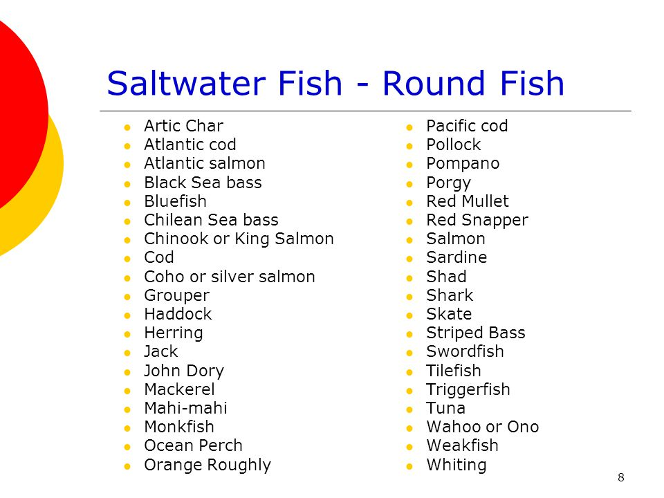 Saltwater Fish - Round Fish