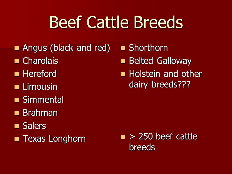 Beef Cattle Breeds Angus (black and red) Charolais Hereford Limousin