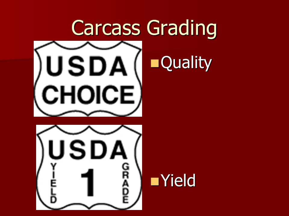 Carcass Grading Quality Yield