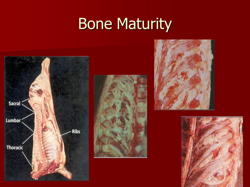 Bone Maturity Also has a 0-100 scale