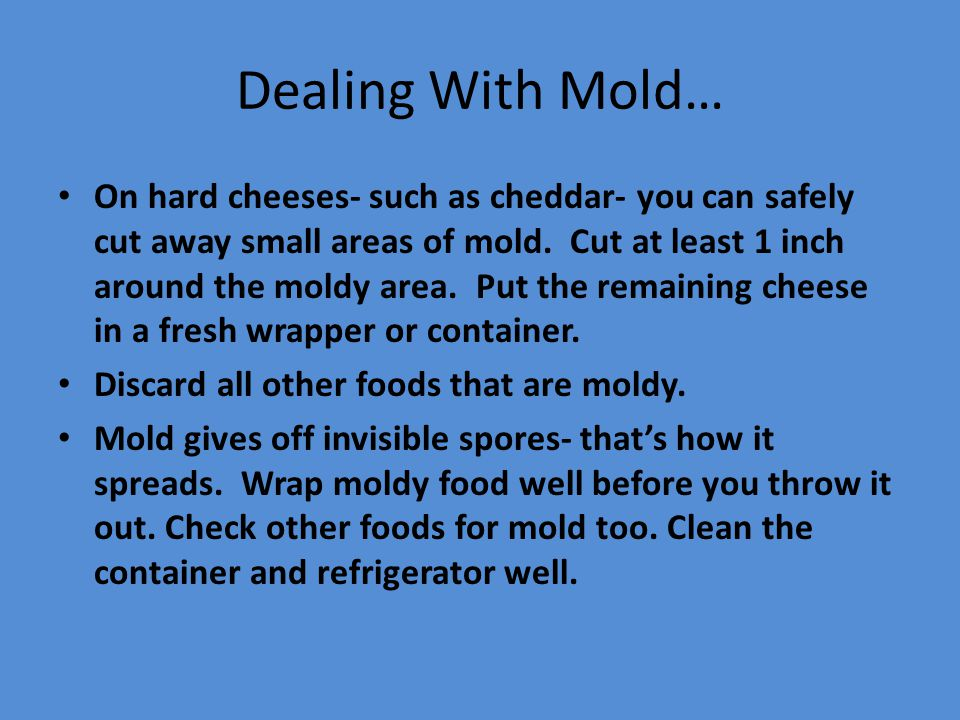 Dealing With Mold…