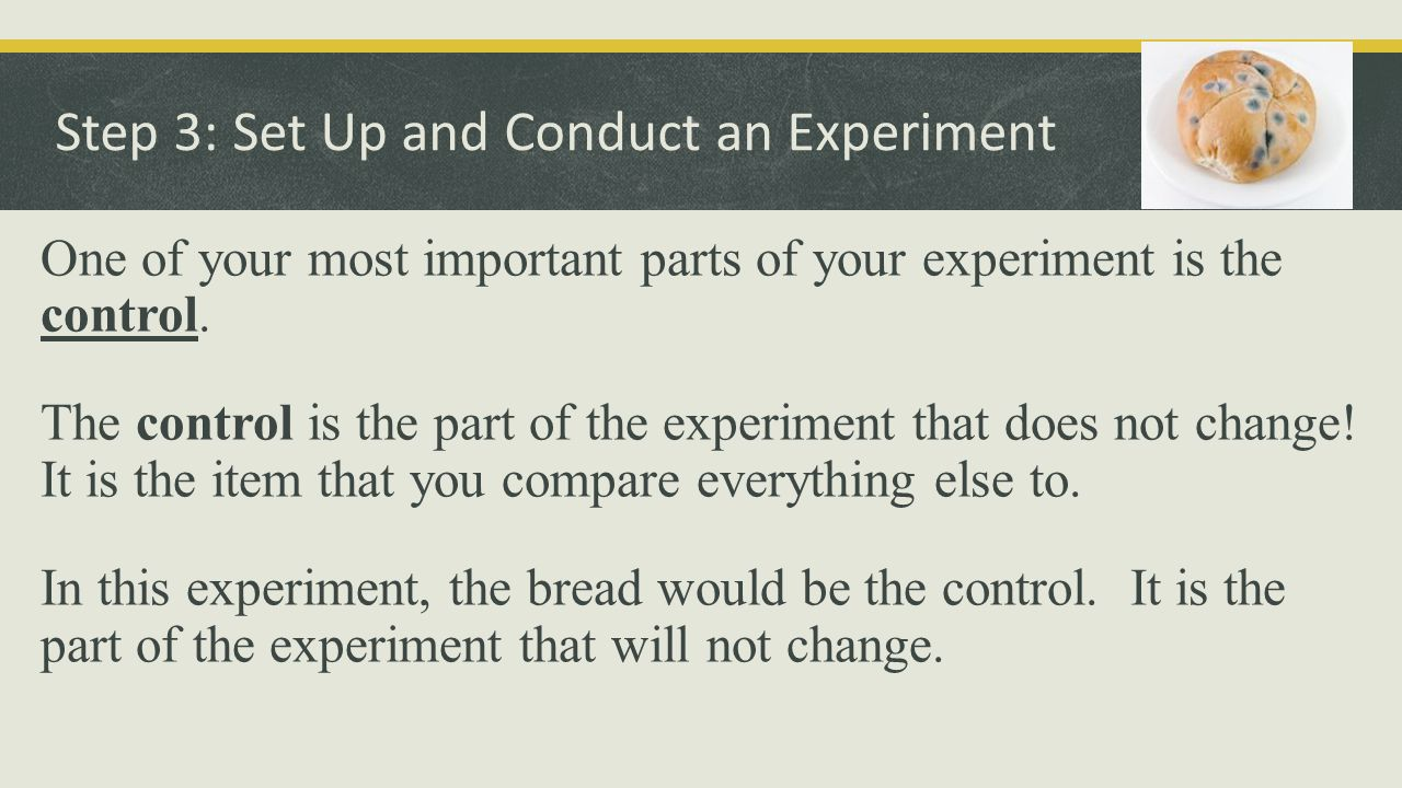 Step 3: Set Up and Conduct an Experiment