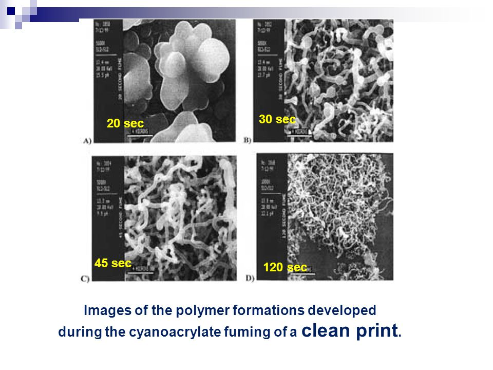 Images of the polymer formations developed