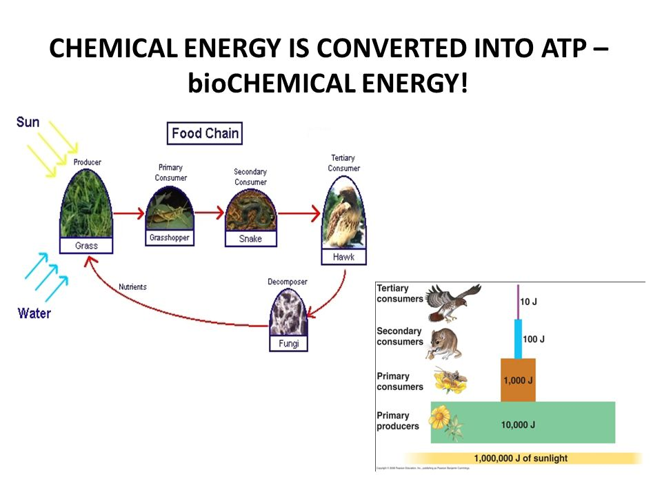 CHEMICAL ENERGY IS CONVERTED INTO ATP – bioCHEMICAL ENERGY!
