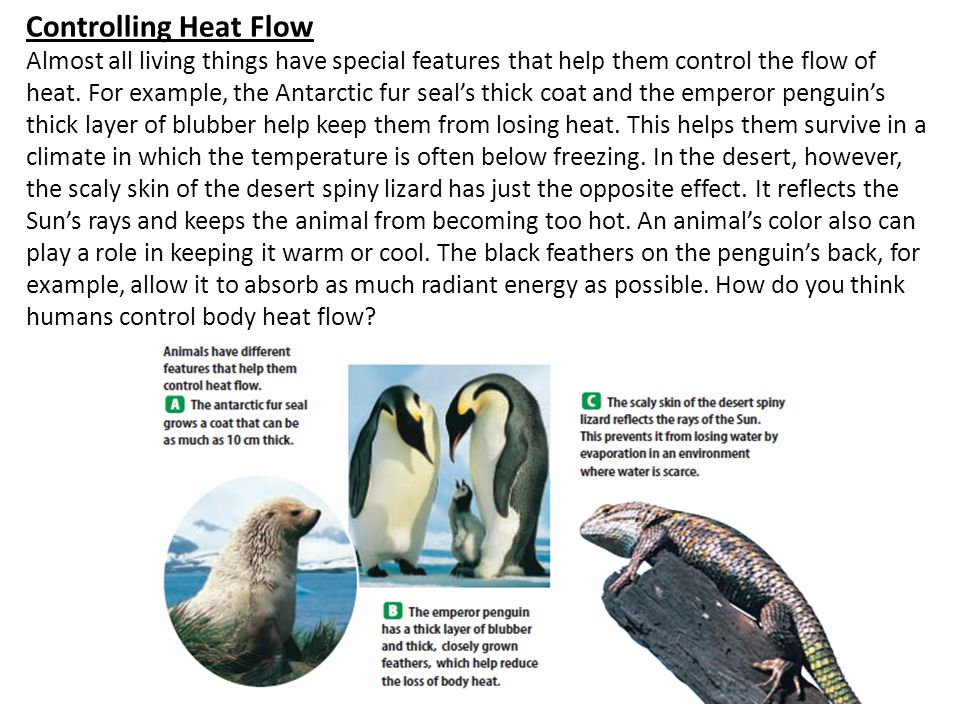 Controlling Heat Flow