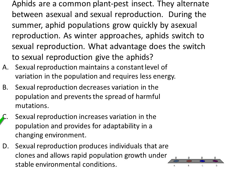 Aphids are a common plant-pest insect