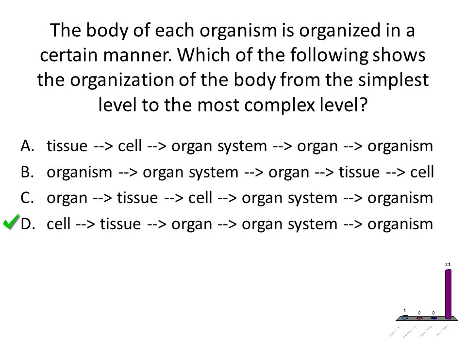 The body of each organism is organized in a certain manner