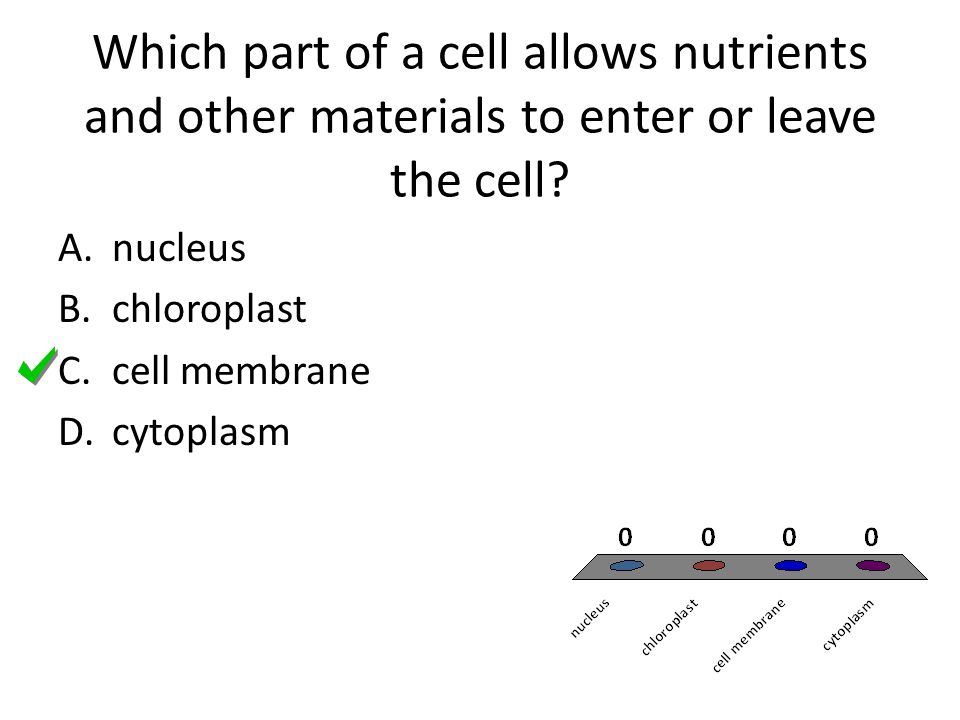 Which part of a cell allows nutrients and other materials to enter or leave the cell