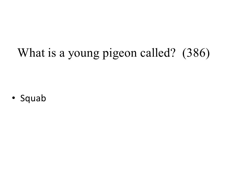 What is a young pigeon called (386)