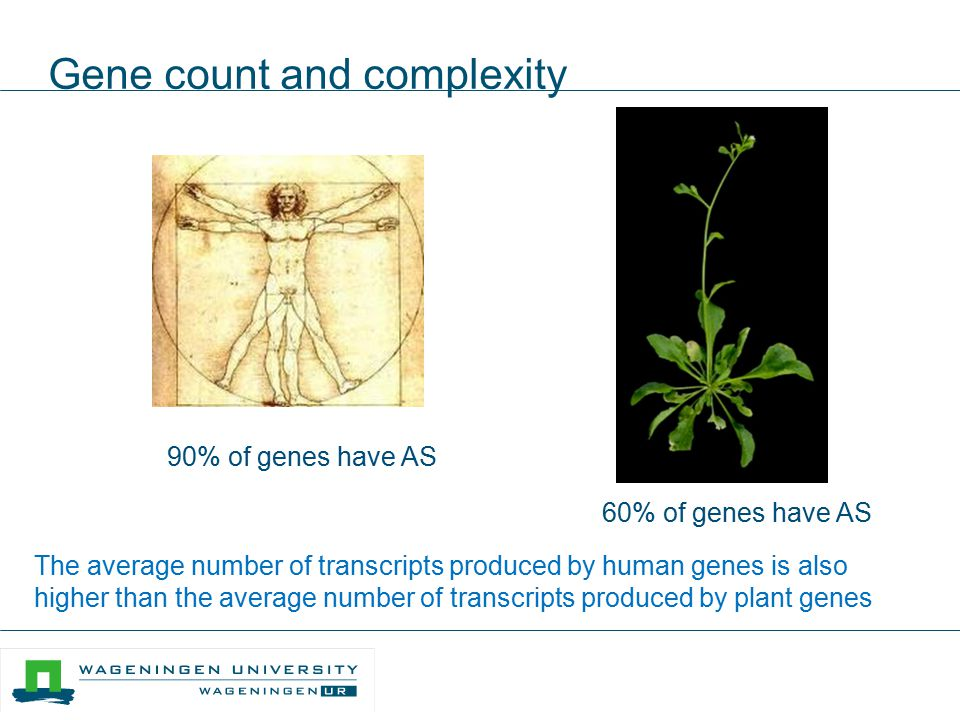 Gene count and complexity