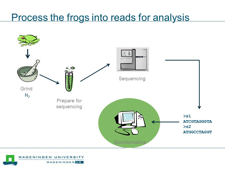 Process the frogs into reads for analysis