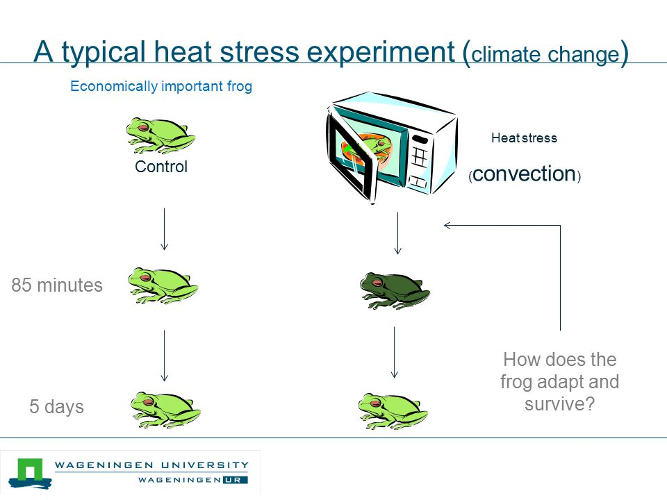 A typical heat stress experiment (climate change)