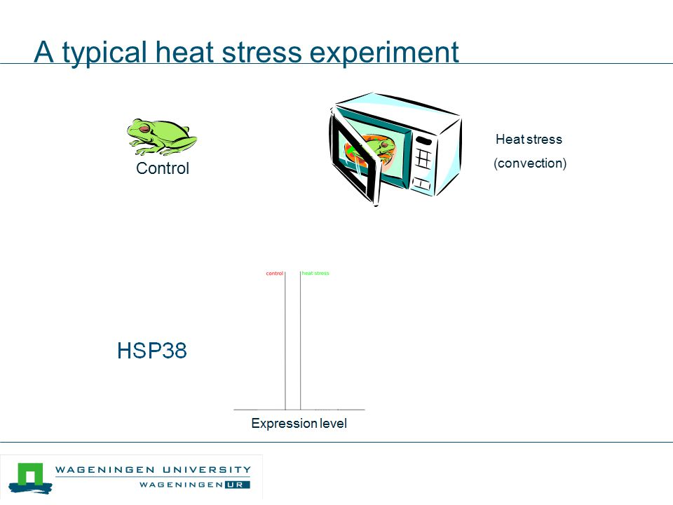 A typical heat stress experiment