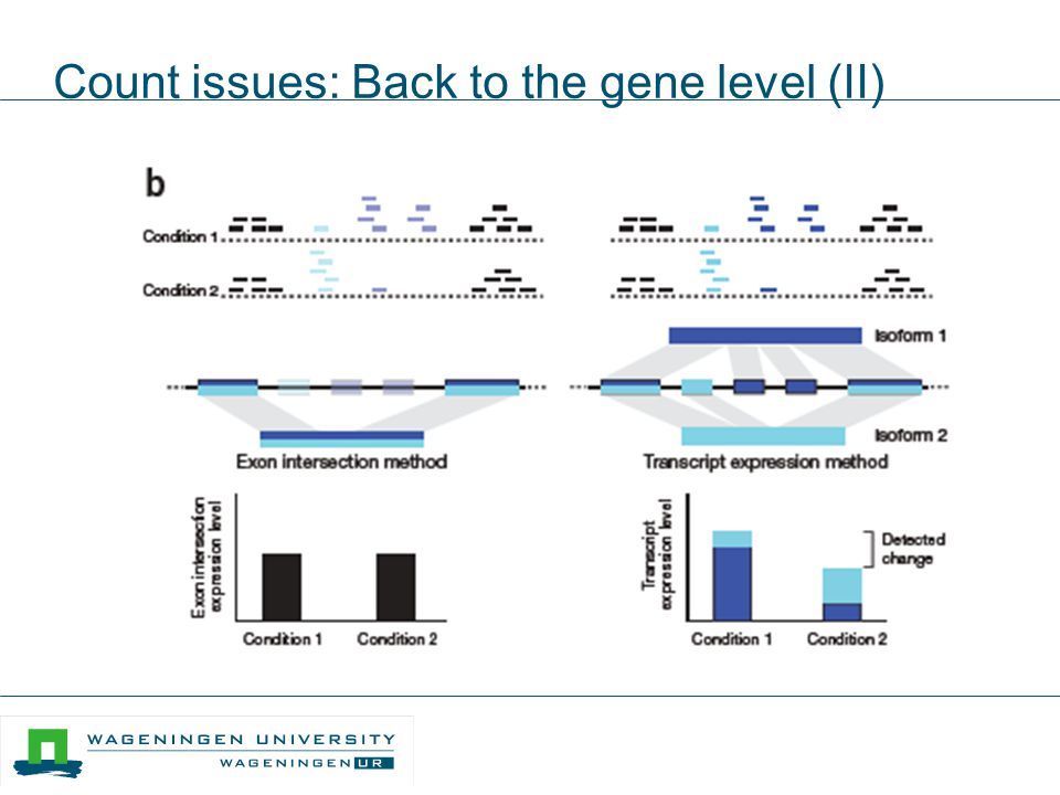 Count issues: Back to the gene level (II)