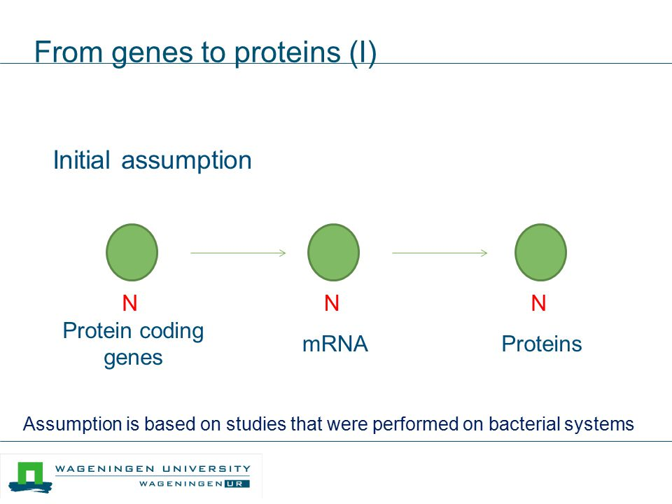 From genes to proteins (I)