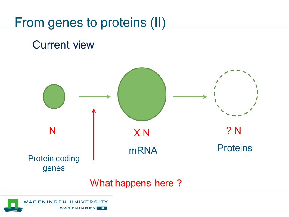 From genes to proteins (II)