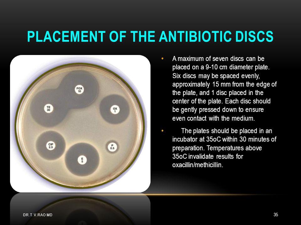 Placement of the antibiotic discs