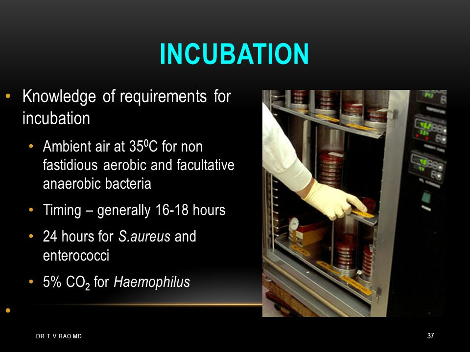 Incubation Knowledge of requirements for incubation