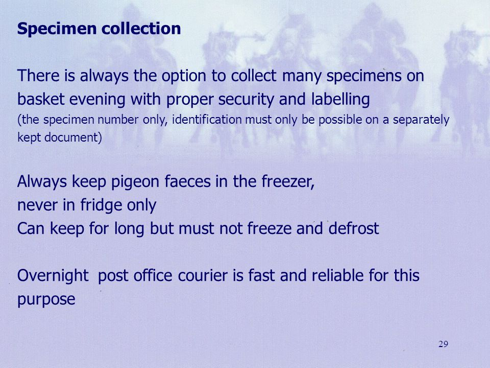 Always keep pigeon faeces in the freezer, never in fridge only