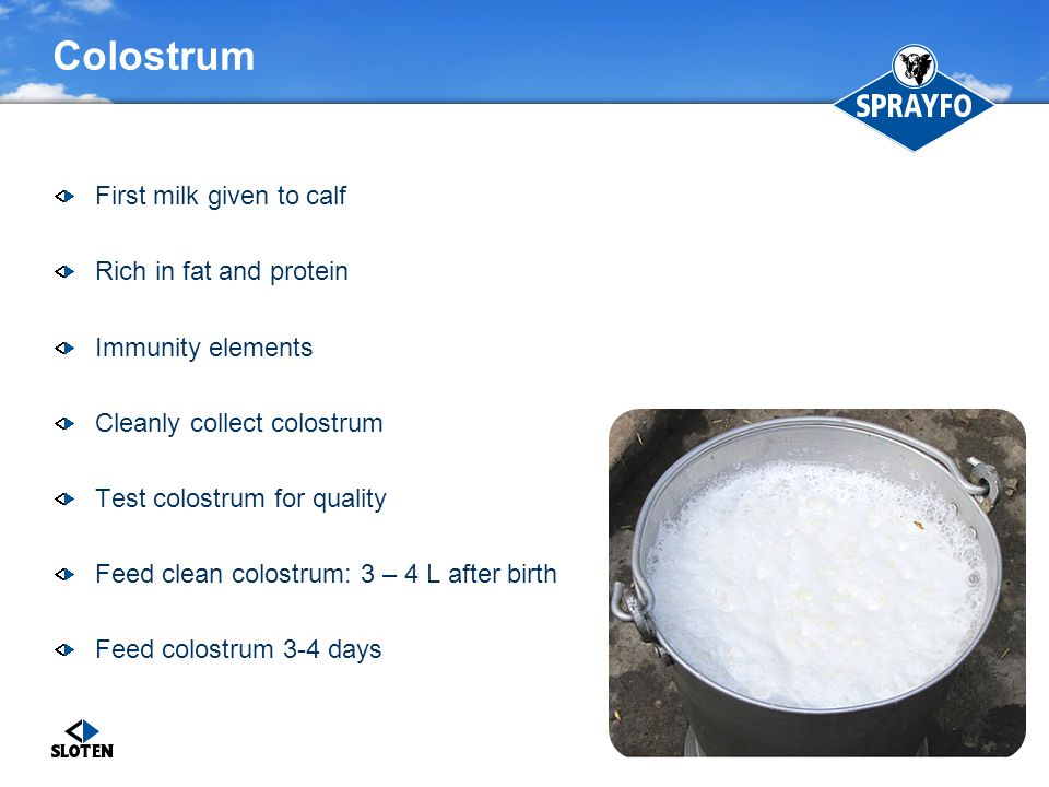 Colostrum First milk given to calf Rich in fat and protein