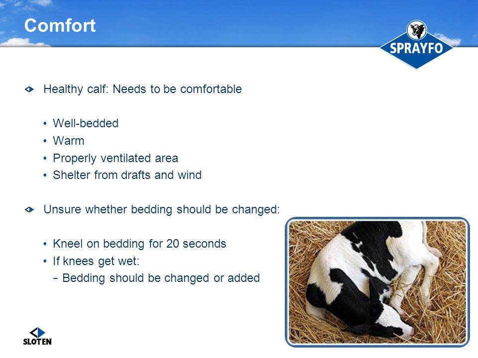 Comfort Healthy calf: Needs to be comfortable Well-bedded Warm