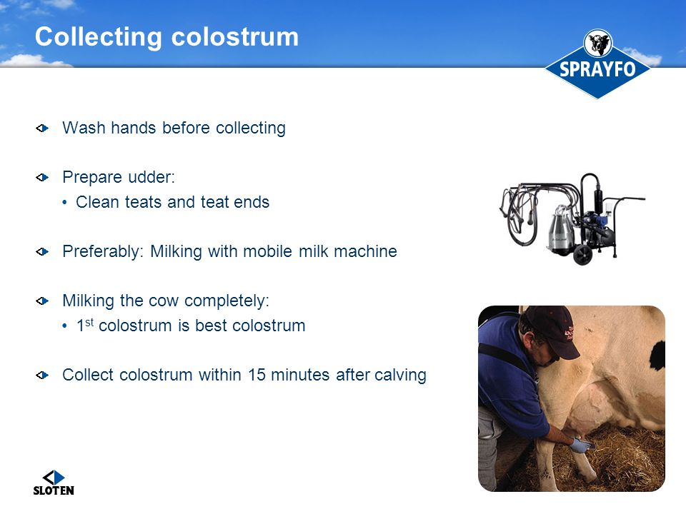 Collecting colostrum Wash hands before collecting Prepare udder: