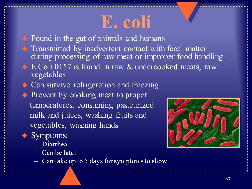 E. coli Found in the gut of animals and humans