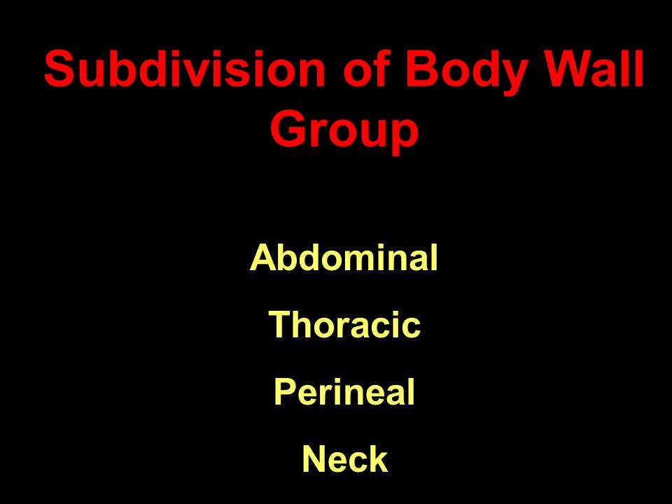 Subdivision of Body Wall Group