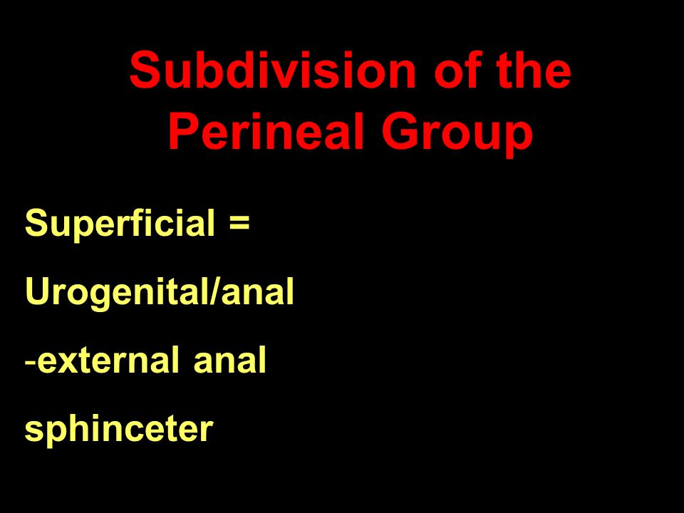 Subdivision of the Perineal Group