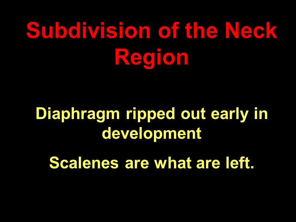 Subdivision of the Neck Region