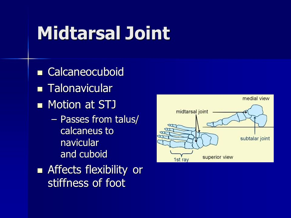 Midtarsal Joint Calcaneocuboid Talonavicular Motion at STJ