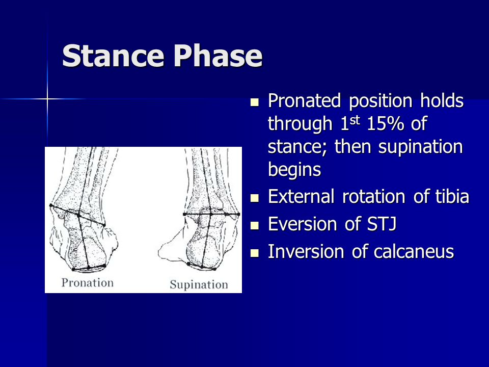 Stance Phase Pronated position holds through 1st 15% of stance; then supination begins. External rotation of tibia.