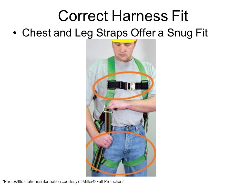 Correct Harness Fit Chest and Leg Straps Offer a Snug Fit