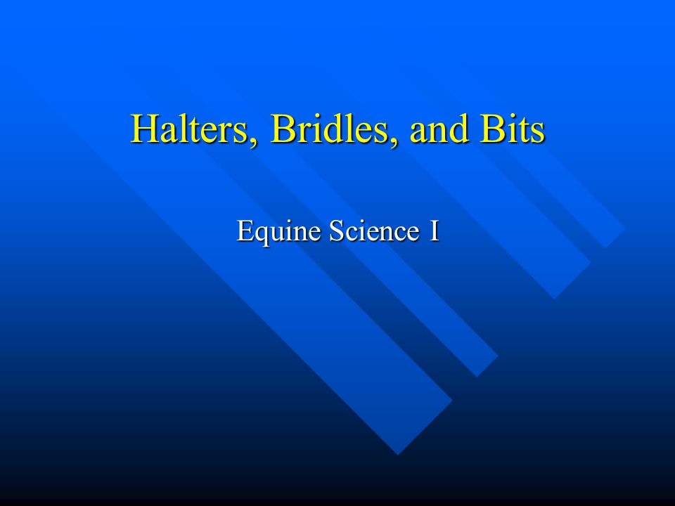 Halters, Bridles, and Bits