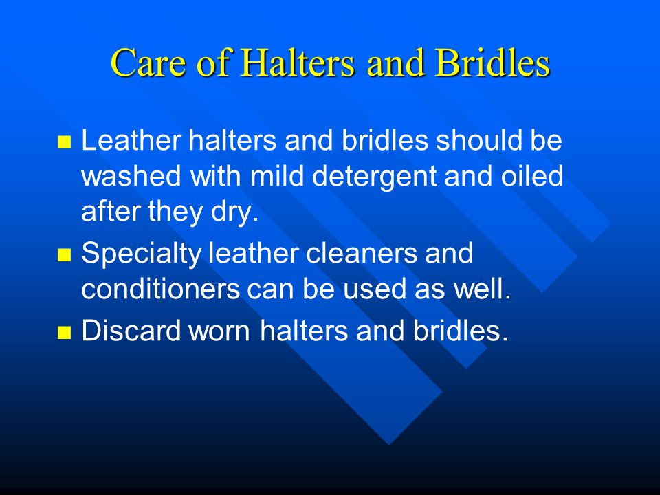 Care of Halters and Bridles