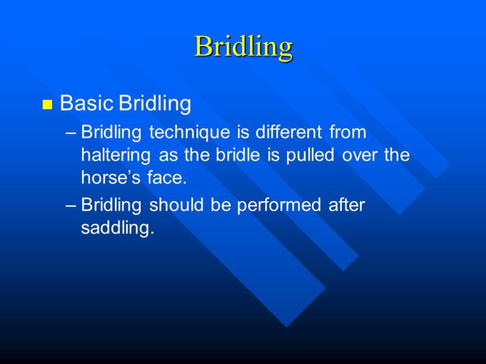 Bridling Basic Bridling