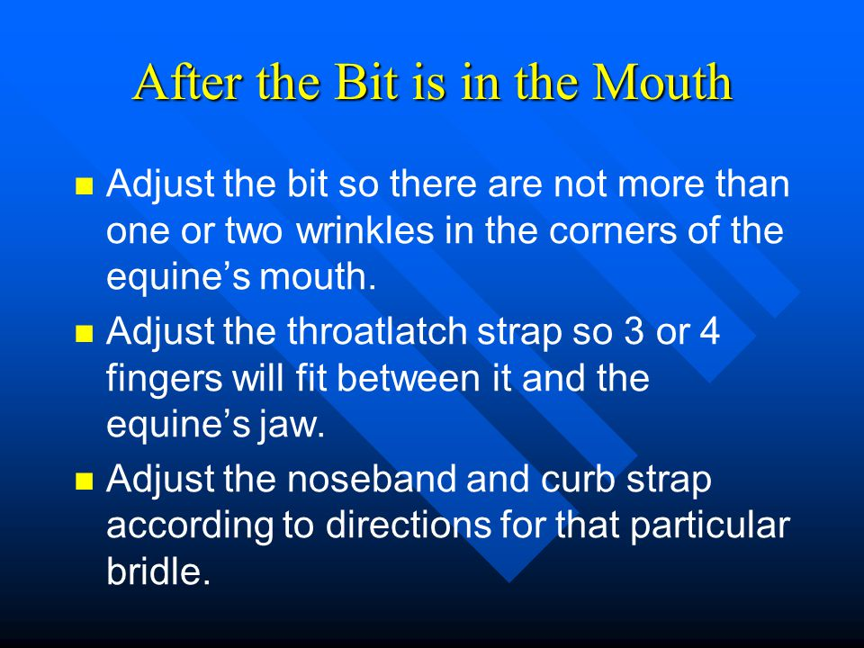 After the Bit is in the Mouth