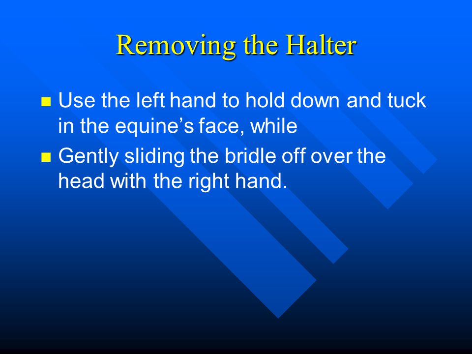 Removing the Halter Use the left hand to hold down and tuck in the equine's face, while.