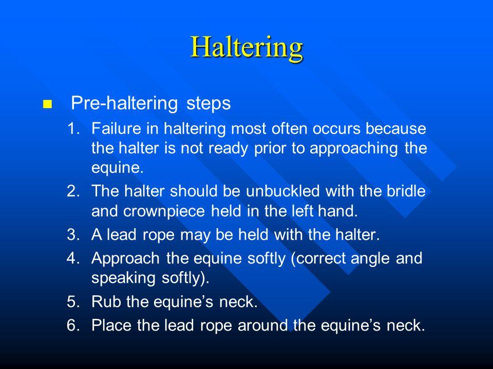 Haltering Pre-haltering steps