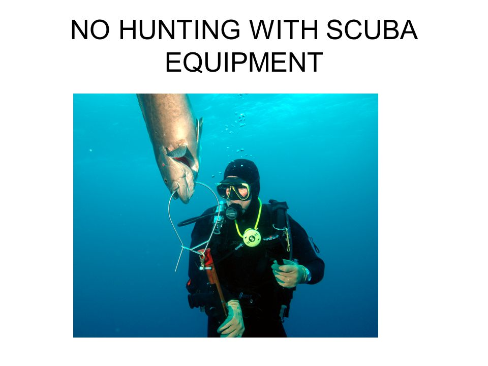 NO HUNTING WITH SCUBA EQUIPMENT