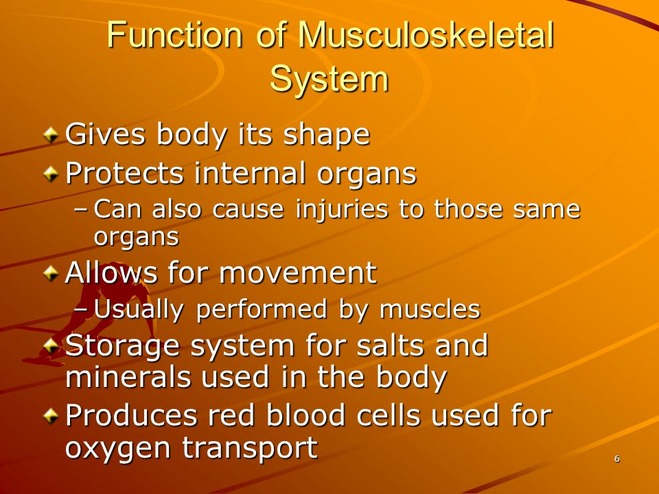 Function of Musculoskeletal System
