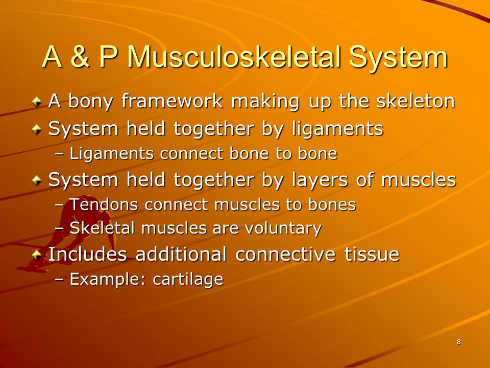A & P Musculoskeletal System