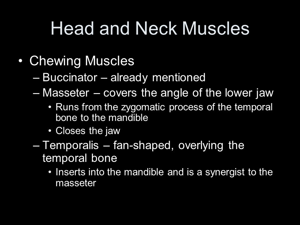 Head and Neck Muscles Chewing Muscles Buccinator – already mentioned