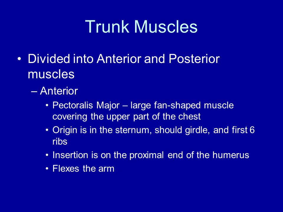 Trunk Muscles Divided into Anterior and Posterior muscles Anterior
