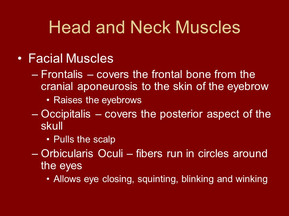 Head and Neck Muscles Facial Muscles