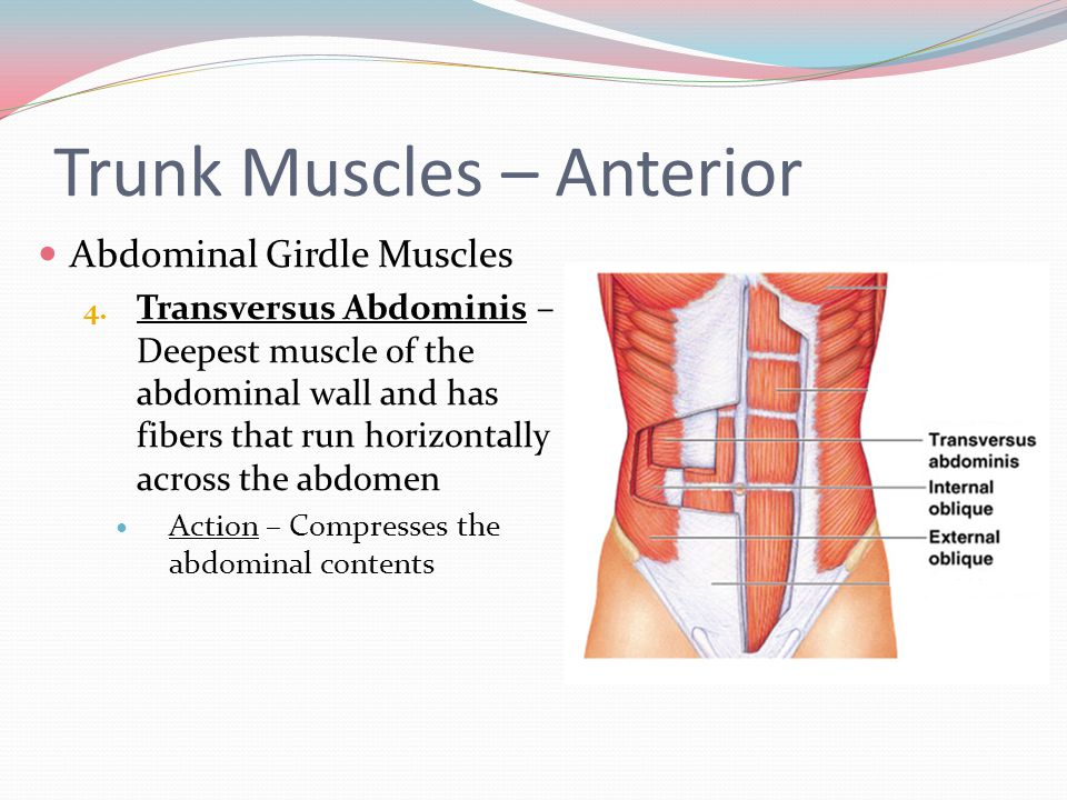 Muscular System Notes Part ppt video online download